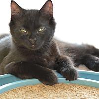 Adopt A Pet :: Bash - Denver, CO