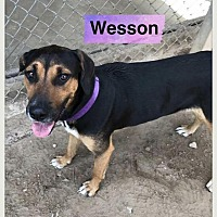Adopt A Pet :: Wesson - Ocala, FL