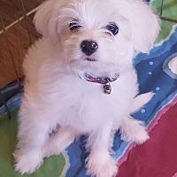 Adopt A Pet :: Baby girl - Temecula, CA