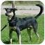 Photo 3 - German Shepherd Dog/Siberian Husky Mix Dog for adoption in Austin, Minnesota - Wycleff