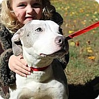 Adopt A Pet :: Cleo - Reisterstown, MD