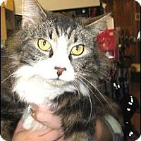 Adopt A Pet :: Riley - Galloway, NJ