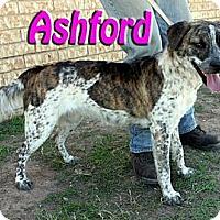 Adopt A Pet :: Ashford - Midland, TX