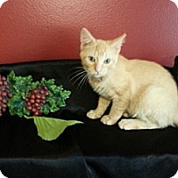 Adopt A Pet :: Ryder - Clearfield, UT