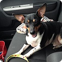 Adopt A Pet :: Dax~Adopted! - Troy, OH