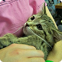 Adopt A Pet :: Boromir - Toledo, OH