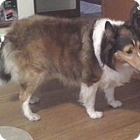 Adopt A Pet :: Dakota - Pittsburgh, PA
