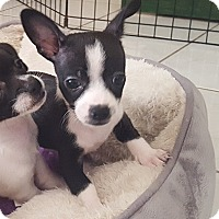 Adopt A Pet :: MASON - Mission Viejo, CA