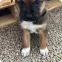 Adopt A Pet :: Monty - Fair Oaks Ranch, TX