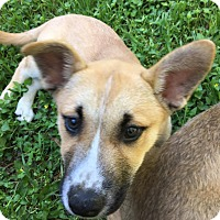 Adopt A Pet :: Ray - West Hartford, CT