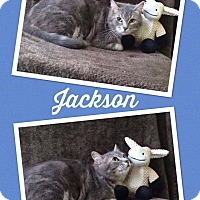 Adopt A Pet :: JACKSON - THORNHILL, ON