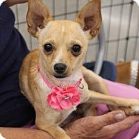 Adopt A Pet :: Bunny - Lodi, CA
