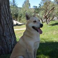 Adopt A Pet :: Daisy - Mountain Center, CA
