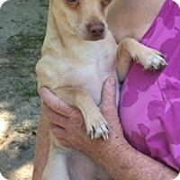 Adopt A Pet :: Inchin - McKinney, TX