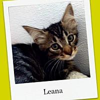 Adopt A Pet :: Leana - Tombstone, AZ