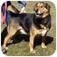 Photo 2 - Shepherd (Unknown Type) Mix Dog for adoption in Somerset, Pennsylvania - Atticus