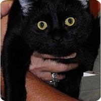 Adopt A Pet :: Jackie - Warminster, PA