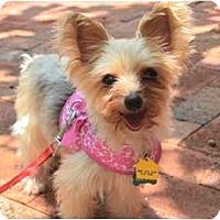 Adopt A Pet :: Petunia - Fairfax, VA