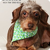 Adopt A Pet :: Rosie-Pending Adoption - Omaha, NE