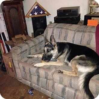 German Shepherd Dog Mix Dog for adoption in Warsaw, Indiana - Zeus