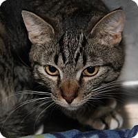 Adopt A Pet :: Chandler (Neutered/Combo'd)) - Marietta, OH