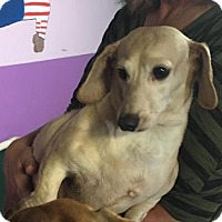 Adopt A Pet :: Coconut - York, SC