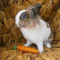Adopt A Pet :: DEEDEE - Goleta, CA