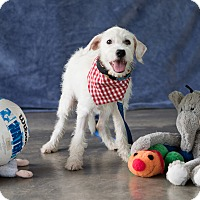Adopt A Pet :: Carina - Calgary, AB