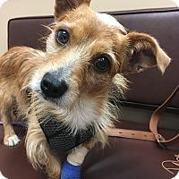 Adopt A Pet :: Nicholas - Indianapolis, IN