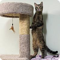 Adopt A Pet :: Arlene - Murphysboro, IL