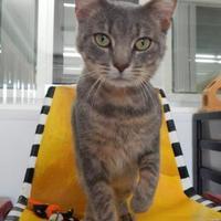 Adopt A Pet :: Auron - Monroe, WI