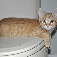 Adopt A Pet :: Toupher *LoveBug! - New Smyrna Beach, FL