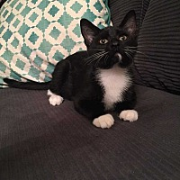Adopt A Pet :: Tinley - Addison, IL
