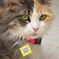 Adopt A Pet :: Trinity Taylor - Lakewood, CO