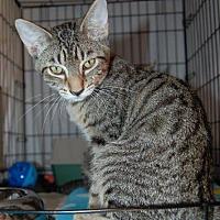 Adopt A Pet :: Charlie - Brainardsville, NY