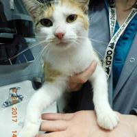 Adopt A Pet :: Misha - Owensboro, KY