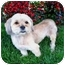 Photo 3 - Lhasa Apso Mix Dog for adoption in Los Angeles, California - BODHI
