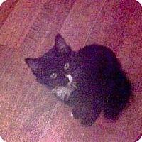 Adopt A Pet :: Jasmine - Harriman, NY