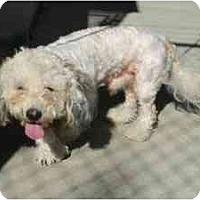 Adopt A Pet :: Curley - Alexandria, VA