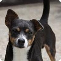 Adopt A Pet :: Silver - Staunton, VA