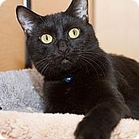 Adopt A Pet :: Tran - Irvine, CA