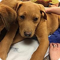 Adopt A Pet :: Enya - Cumming, GA