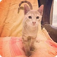 Adopt A Pet :: Finn - Raleigh, NC