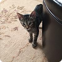 Adopt A Pet :: Sweetie - San Ramon, CA