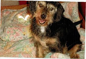 Terrier (Unknown Type, Medium) Mix Dog for adoption in Homer, New York - Beau