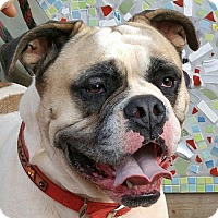 Adopt A Pet :: Roscoe - Greenville, SC