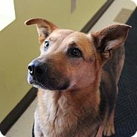 Adopt A Pet :: Gunner - Claremore, OK
