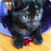 Adopt A Pet :: Pixie - Media, PA