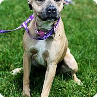 Adopt A Pet :: Susie Q - Appleton, WI