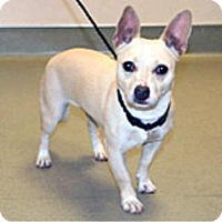 Adopt A Pet :: Sugar - Wildomar, CA